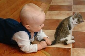 Для ребенка лучше завести кота или кошку